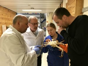 red king crab and researchers