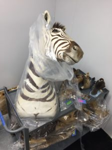 zebra head and other items from the collection
