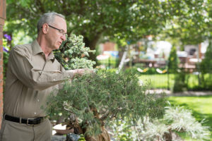 darrell whitley tends to his bonsai trees