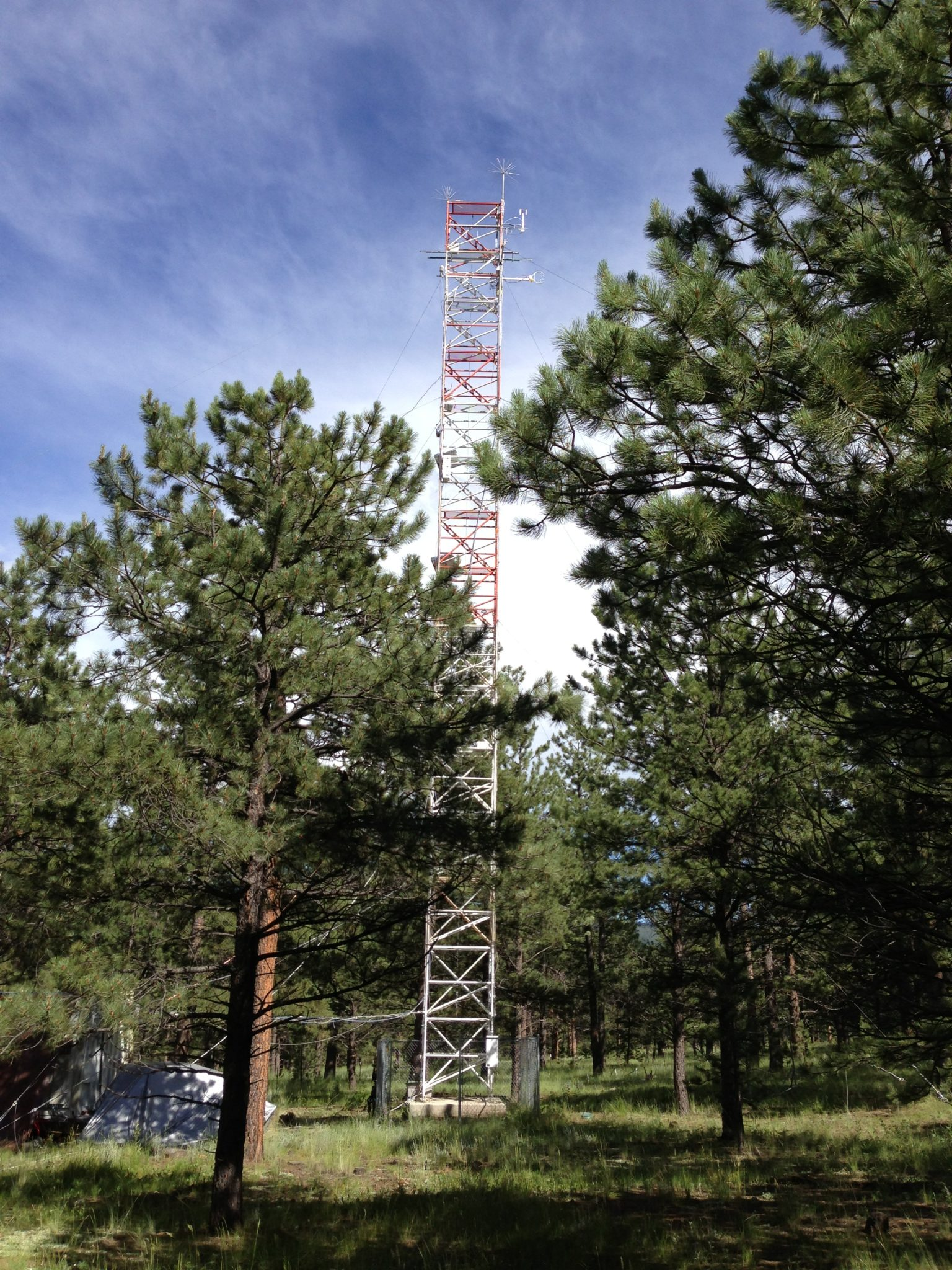 Tower in the trees