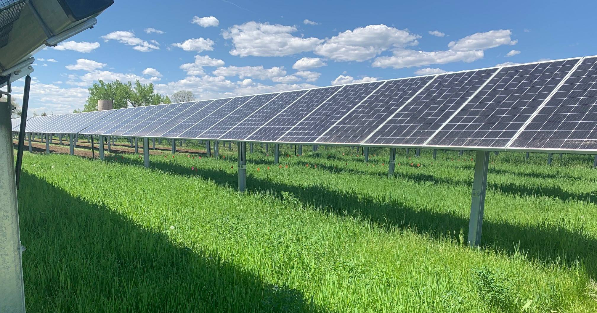 solar panels and forage grasses
